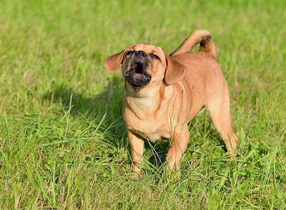 Barking dogs – Are they still a nuisance?